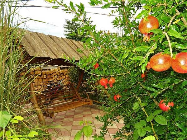 Гостевой дом «У Татьяны» в Евпатории 3
